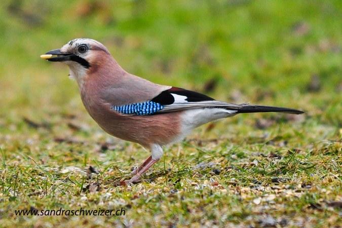 Vogeltränken Für Den Garten mit beste stil für ihr wohnideen
